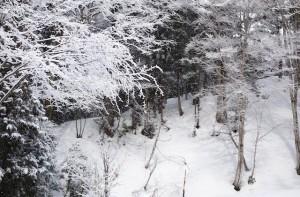 雪化粧した木々