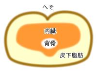 内臓脂肪CT画像イメージ