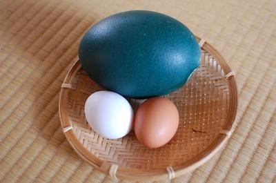 エミューの卵と普通の卵