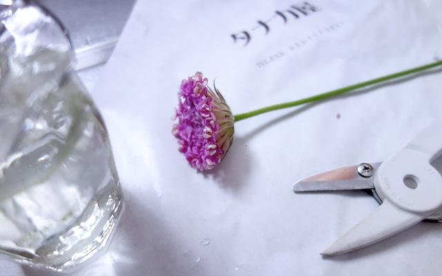 一輪の花とスマートシザー(花ばさみ)