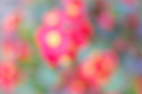 ピントのずれた赤い花