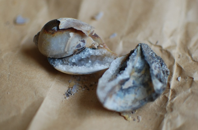 ハンマーで割った化石