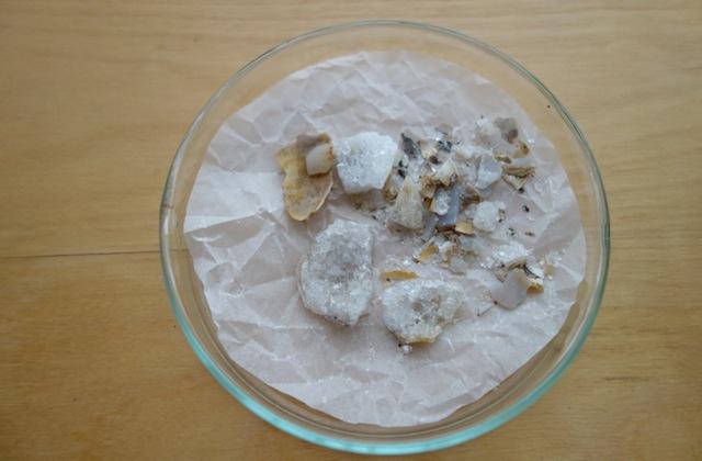 化石を割った欠片と小さな結晶をシャーレに保管