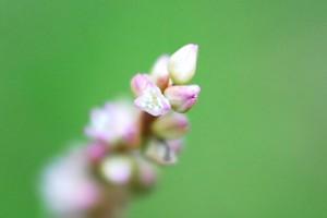 マクロフィルターで撮った野の花