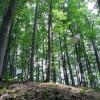 森の中のブランコ