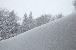 雪の下には、土が待っている