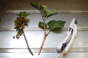 スマートシザーで、庭の花と枝を切ってみる