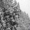 わーい、雪だ!雪だ!