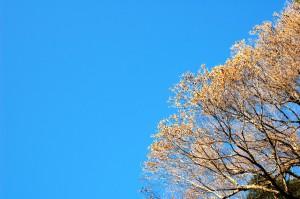 晩秋の青空