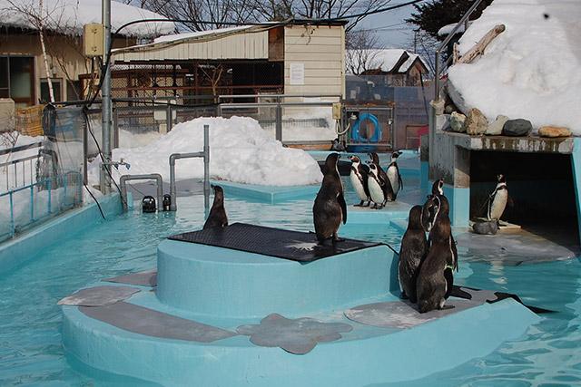 須坂市動物園のペンギン