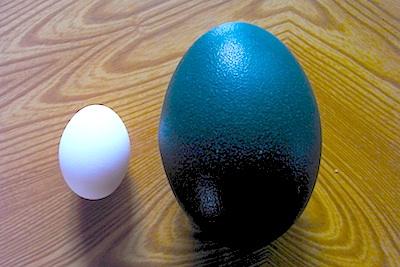 エミューの卵と鶏卵