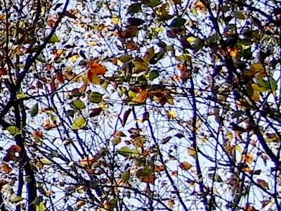 キラキラの木の枝