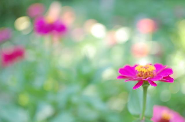 うつくしいと感じるもの、庭の花