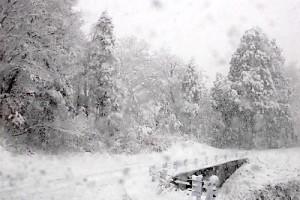 12月1日の雪